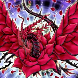 """Black Rose Dragon"""