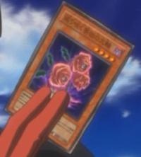 RevivalRose-JP-Anime-5D.png